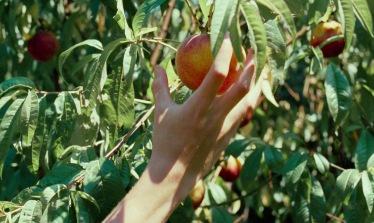 Motifs in Call Me by Your Name (2017). By Amy Hicks   Film Matters Magazine
